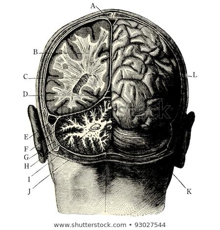 человека раненый голову печально медицинской служба Сток-фото © RAStudio