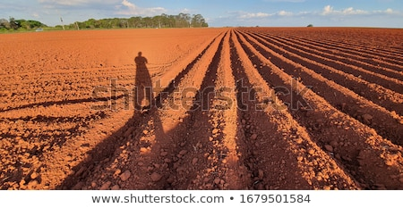 Plowed Ground Stock photo © Dreamframer