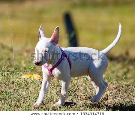 Lány áll zöld füves mező fiatal lány Stock fotó © gregorydean