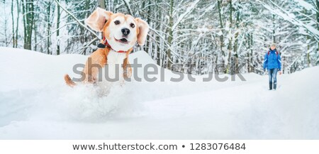 соответствовать · женщину · ходьбе · зима · пейзаж - Сток-фото © blasbike