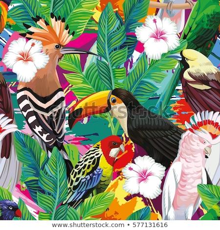 Zomer illustratie vogel papegaaien snavel bloem Stockfoto © articular