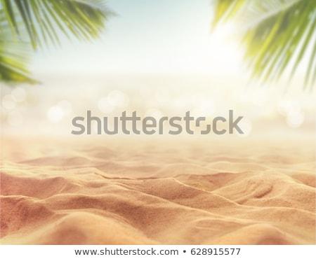 Yaz bukalemun gökyüzü manzara kaya Stok fotoğraf © wildman