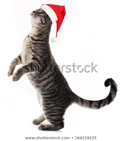 lovely santa cat with stripes standing stock photo © feedough