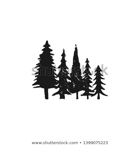vektör · huş · ağacı · yakacak · odun · yalıtılmış · beyaz · orman - stok fotoğraf © jeksongraphics