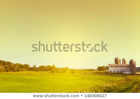 納屋 乾草 地上 実例 家 建物 ストックフォト © colematt