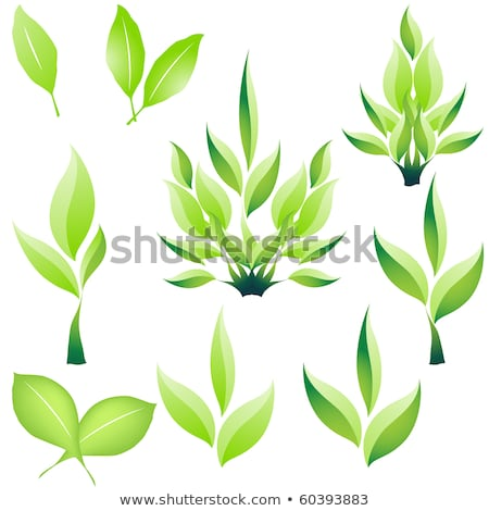 Clover leaf clip art graphic design template Stock photo © haris99