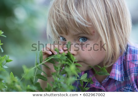 little young mint grows in nature Stock photo © romvo