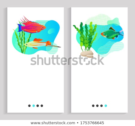 Aquaristics Fish Floating in Water, Seaweed Stones Stock photo © robuart