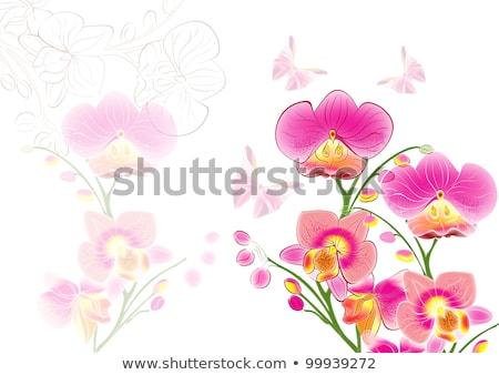 Rózsaszín orchidea virág virágzik absztrakt virágmintás Stock fotó © Anneleven