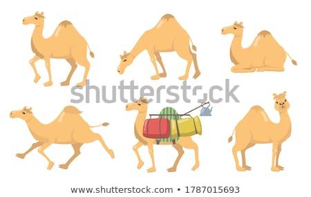 Desenho animado camelo isolado branco sorrir crianças Foto stock © tigatelu