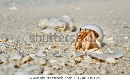 krab · strandzand · gat · strand · zon · natuur - stockfoto © sahua