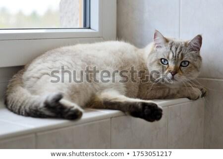 tomcat Stock photo © pterwort