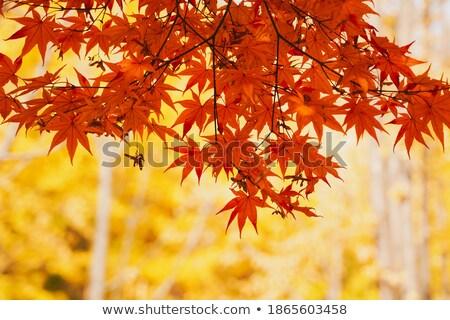 Amarelo folhas escada outono padrão textura Foto stock © Arrxxx