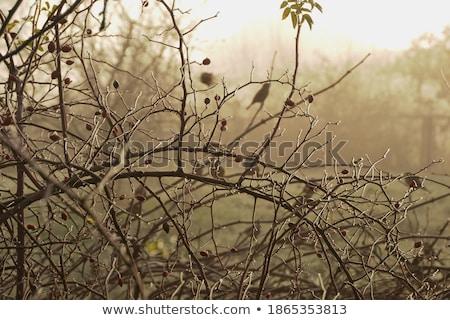 Congelada pardal jovem passarinho sessão enfeitar Foto stock © taviphoto