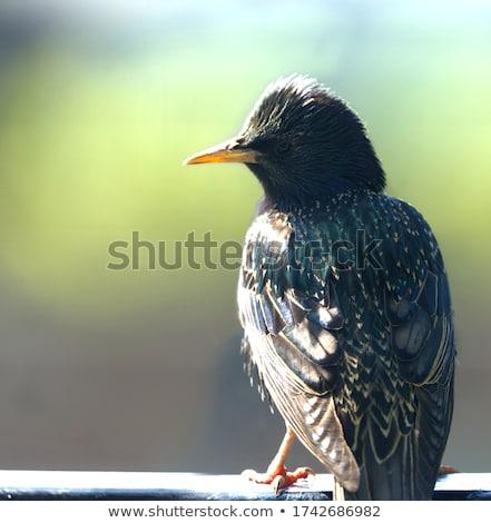 птица небе черный цвета только Сток-фото © latent
