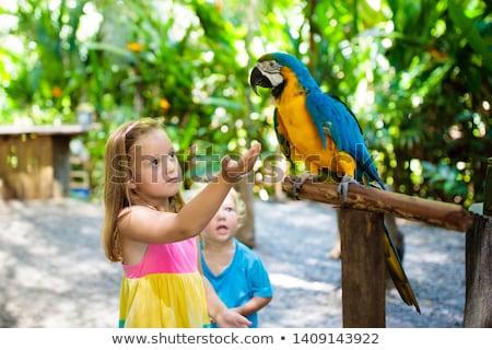 Papuga zoo posiedzenia rząd relaks zwierząt Zdjęcia stock © RuslanOmega