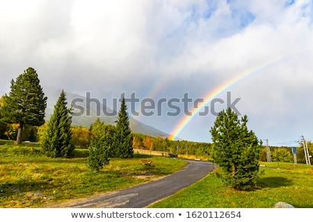 ver · montanha · céu · flor · árvore · verde - foto stock © orbandomonkos