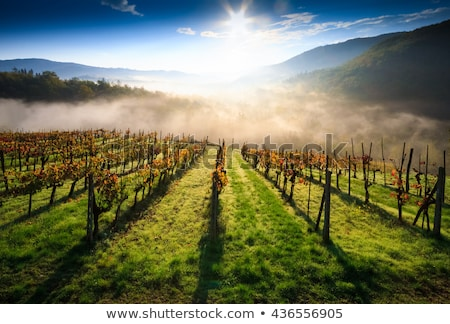 Foto stock: Hills · outono · Itália · de · manhã · cedo · ver · colorido