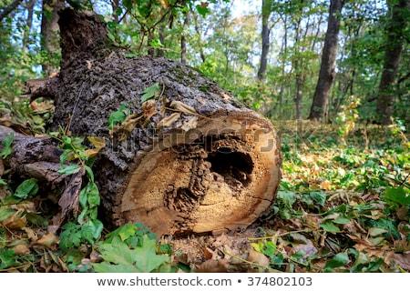 Gesneden rot boom arme vuile slechte Stockfoto © pzaxe