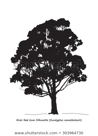 Eucalyptus Tree Silhouette Stock photo © silkenphotography