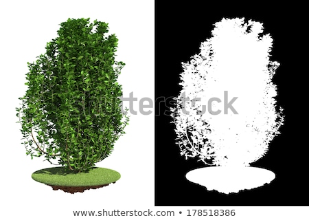 Verde arbusto pormenor máscara grama isolado Foto stock © tashatuvango
