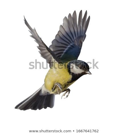 Muhteşem el yeme kuş sonbahar hayvan Stok fotoğraf © marunga