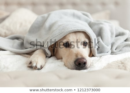 Tristesse bol chien morts animal Photo stock © ivonnewierink