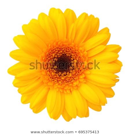yellow flower detail  Stock photo © jonnysek