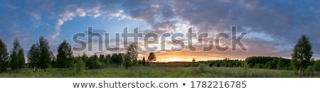 Stok fotoğraf: Tree Silhouette And Beautiful Vibrant Sunset Clouds
