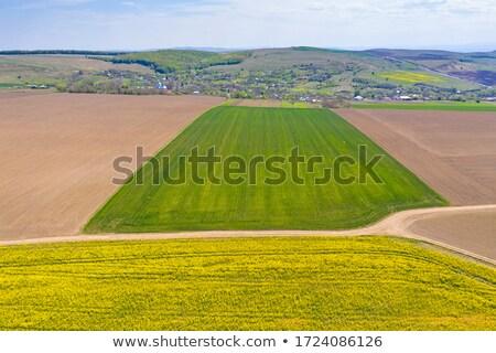 Village derrière viol domaine jaune Photo stock © manfredxy