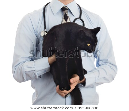 Veterinarian holds a black cat for examination Stock photo © michaklootwijk