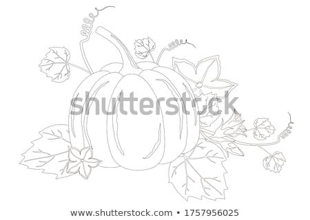Colorful background of ornamental autumn gourds Stock photo © ozgur