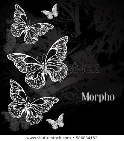 primavera · verniciato · farfalle · confine · illustrazione · carta - foto d'archivio © blackmoon979