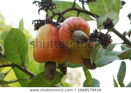 kidneys and tree healthy lifestyle concept stock photo © tefi