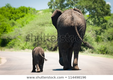 big elephant with young baby elephant in kruger park stock photo © compuinfoto
