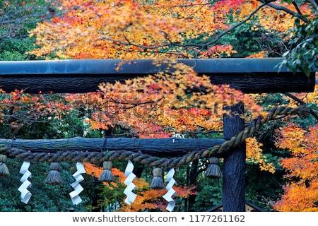 Santuario tempio kyoto Giappone bambù foresta Foto d'archivio © daboost
