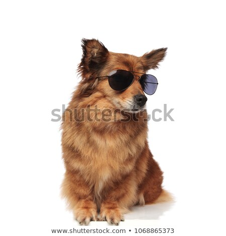cool trendy seated brown dog with sunglasses looks to side Stock photo © feedough
