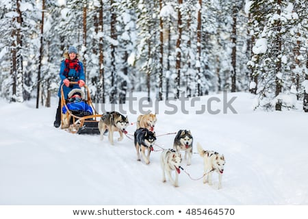 Family on a dog sled Stock photo © IS2