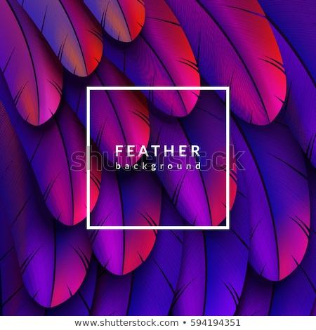 羽毛 · グラフィックデザイン · テンプレート · ベクトル · 孤立した · 実例 - ストックフォト © frimufilms