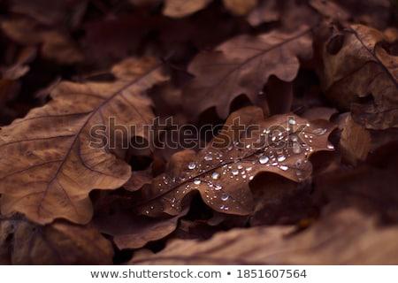 Najaar natuur decoratie bladeren groet kaarten Stockfoto © odina222