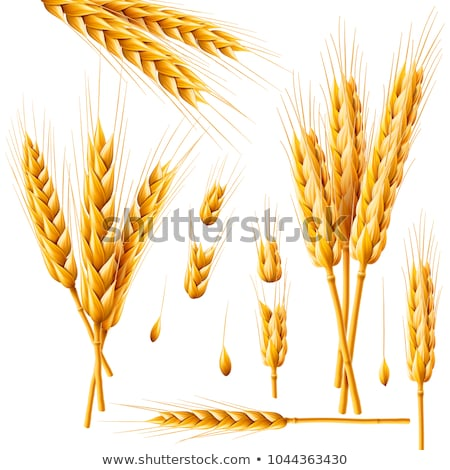 realistic ears of wheat isolated agriculture natural product stock photo © marysan