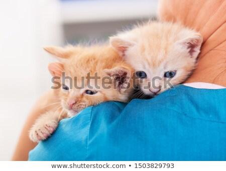 cute kittens climb to safety on the veterinary professional shou stock photo © ilona75