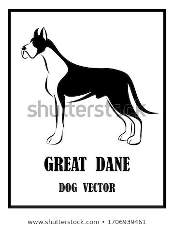 Great Dane Dog Breed Cartoon Retro Drawing Stock photo © patrimonio