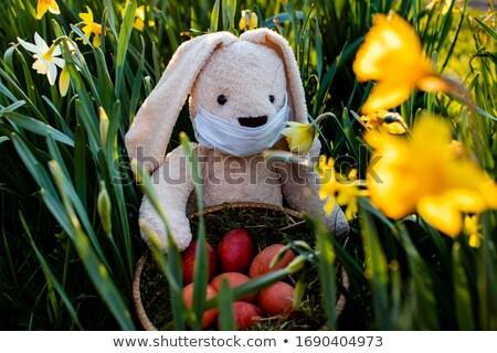 beautiful white easter bunny guarding the colorful eggs stock photo © ilona75