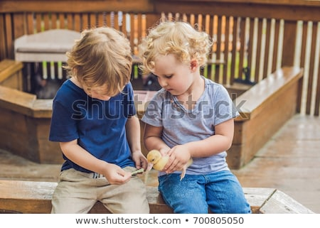 Toddlers girl and boy playing with the ducklings in the petting zoo Stock photo © galitskaya