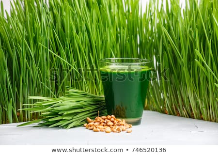 Wheatgrass shot. Juice from wheat grass. Trend of health. wheat grass BANNER, LONG FORMAT Stock photo © galitskaya
