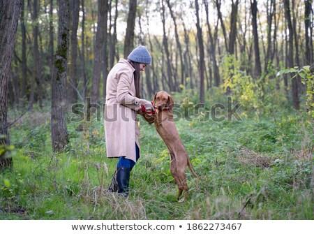 Gelukkig naar hond bos najaar glimlachend Stockfoto © brianguest