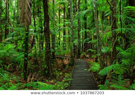 boardwalk in tropical rain forest Stock photo © kikkerdirk