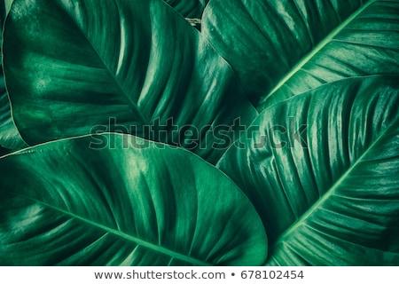 Green leaf texture. Abstract spring background Stock photo © dashapetrenko