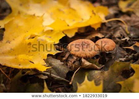 Cogumelo venenoso par crescente grama nu peito Foto stock © lisafx